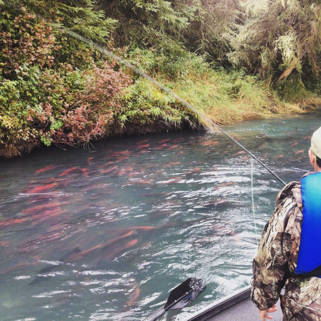 Kenai river canyon kenai river fishing guide cooper landing for Cooper landing fishing guides